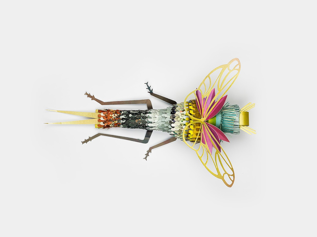 Insect 1